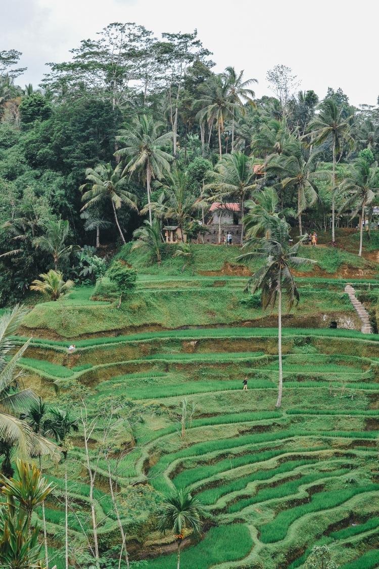 Bali-8480
